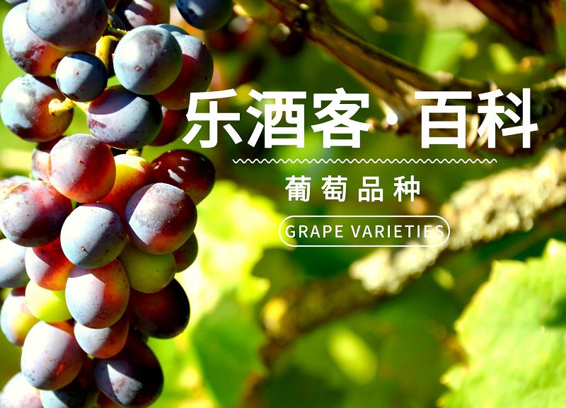 酒标没写,我怎么知道喝的酒是什么葡萄酿造的?